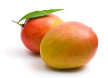 Mango. Two mangoes on white background royalty free stock photo