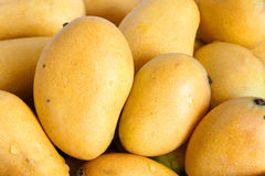 Mango. The background of small mangoes stock photography