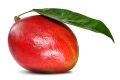 Mango. On the white background Stock Images