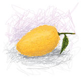 Mango Royalty Free Stock Images