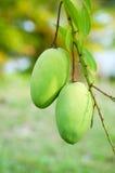 Mango Stock Image