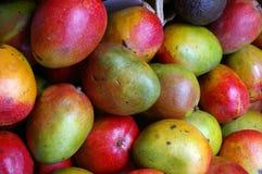 Mango Fotografie Stock