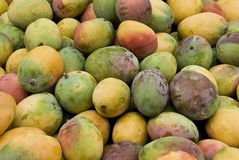 Mango. Freah Mango fruit in an outdoor food market Stock Photography