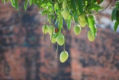Mango Fotografía de archivo