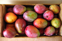 Box of mango fruits  Royalty Free Stock Photos