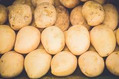 mango Immagini Stock