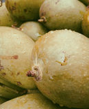 mango Alimento delicioso Fotos de archivo