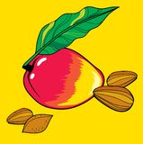 Mango and almonds. Vector illustration of mango and almonds royalty free illustration
