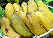 Mango amarillo en la cesta Imágenes de archivo libres de regalías