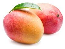 Mango bär frukt med vattendroppar bakgrund isolerad white royaltyfri bild