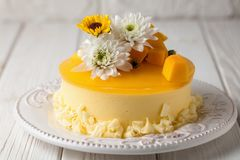 Mango cheesecake with yellow jelly topping, with flowers and fresh mango pieces on white background, horizontal composition.  royalty free stock image