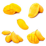 Mango collection Stock Image