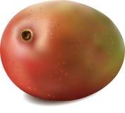 Mango colorato naturale nel vettore Immagine Stock