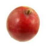 Mango de la visión superior Fotografía de archivo