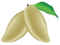 Mango del oro Foto de archivo
