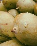 Mango. Delicious Food. Mango in Garden. Close up.Water Drop. background. Natural Fruits. Seasonable Stock Photos