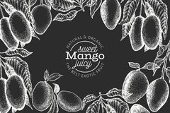 Mango design template. Hand drawn vector tropic fruit illustration on chalk board. Engraved style fruit. Vintage exotic food. Mango design template. Hand drawn vector illustration