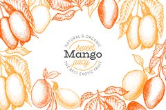 Mango design template. Hand drawn vector tropic fruit illustration. Engraved style fruit. Vintage exotic food banner. Mango design template. Hand drawn vector vector illustration