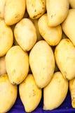 Mango exotisk frukt Royaltyfria Bilder
