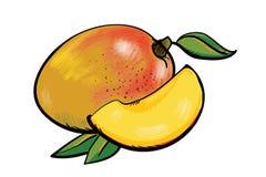 Mango fresco Handdrawn Foto de archivo libre de regalías
