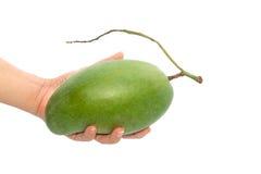 Mango fresco - manghi verdi sulle mani della donna con isolato su briciolo Fotografie Stock