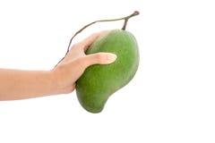 Mango fresco - mangos verdes en las manos de la mujer con aislado en pizca Imagen de archivo libre de regalías