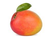 Mango fruit Stock Images
