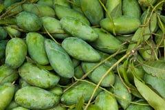 The mango fruit, green fruit. Royalty Free Stock Image
