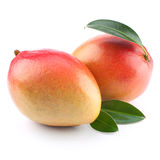 Mango fruit isolated Stock Photography
