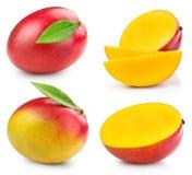Mango fruit isolated. Mango fruit collection isolated on white background Clipping Path Royalty Free Stock Image