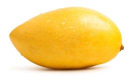 Mango fruit isolated. Mango fruit with water drops. Isolated on a white background royalty free stock photos