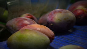 Mango fruit moving in mechanized industrial line stock video footage