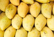 Mango fruit at thai market Stock Images