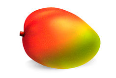 Mango fruit vector. Mango fruit on white background.Vector illustration Stock Photo