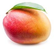Mango fruit. Royalty Free Stock Image