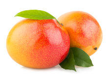 Mango fruits Royalty Free Stock Photography