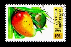 Mango fruktserie, circa 1996 Royaltyfri Fotografi