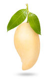 Mango giallo isolato su bianco Fotografie Stock