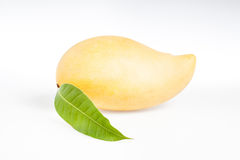 Mango giallo su bianco Fotografia Stock