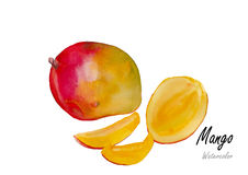 Mango.Hand drawn watercolor painting on white background w, watercolor, flower, flowers, water, illustration, background, Stock Images