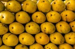 Mango indiano Fotografia Stock Libera da Diritti