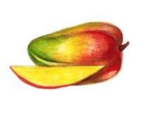 Mango juicy fruit hand-drawn   illustration Stock Images