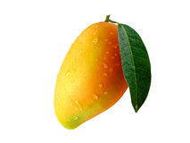 Mango3 stock photography