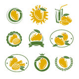Mango labels and elements set. Vector Royalty Free Stock Photo
