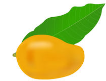 Mango and Leaf Stock Images