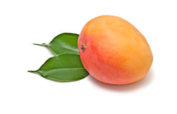 Mango on leaves Stock Photo