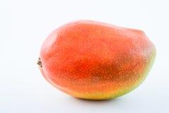 Mango Mangifera indica Stock Photography