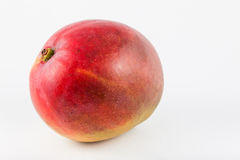 Mango Mangifera indica Stock Photo