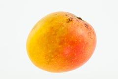 Mango Mangifera indica  Stock Photo