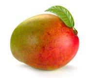 Mango med sidor Arkivbild